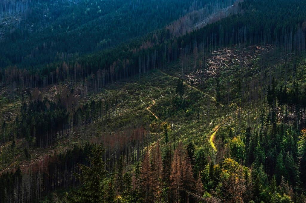 Sustainable-Furniture-Aerial-Photo-Of-Deforestation