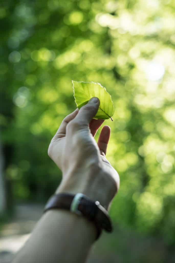 An-Outstretched-Hand-Holding-A Leaf